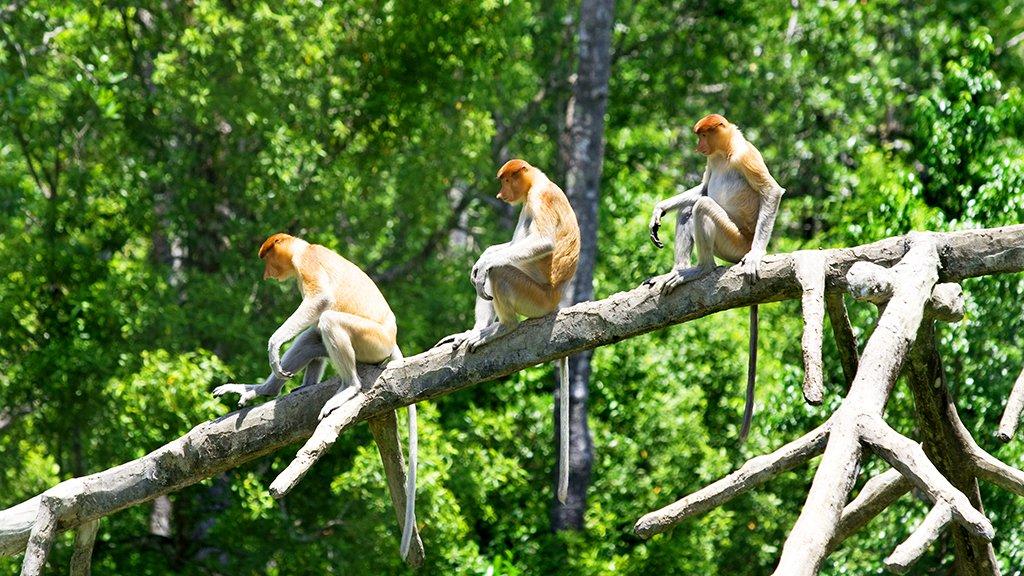3 nasiques dans la jungle, Perhentian