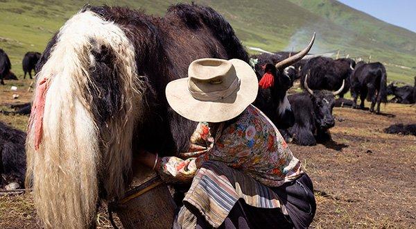 voyage chine Sichuan