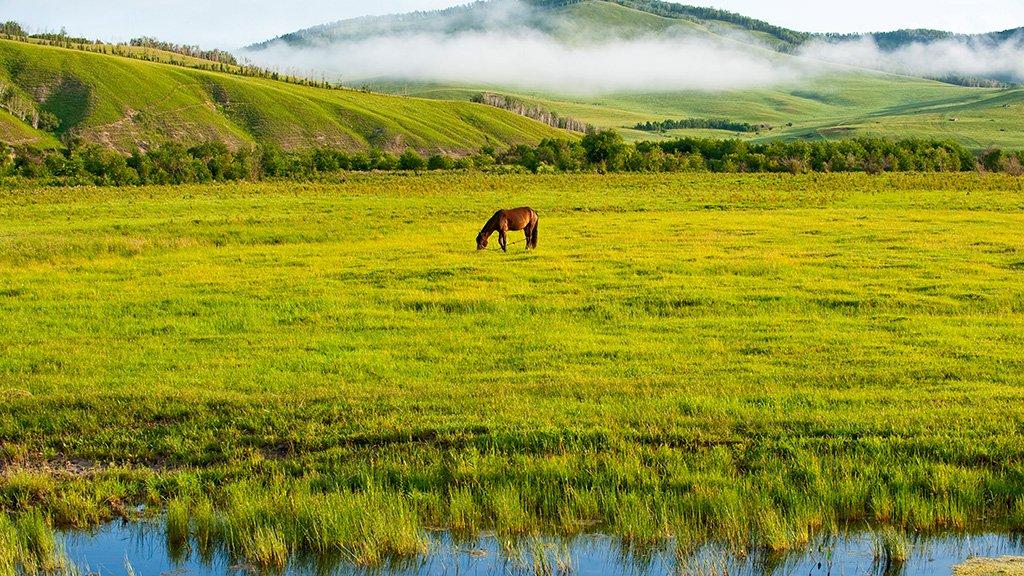 Steppes mongolie intérieure