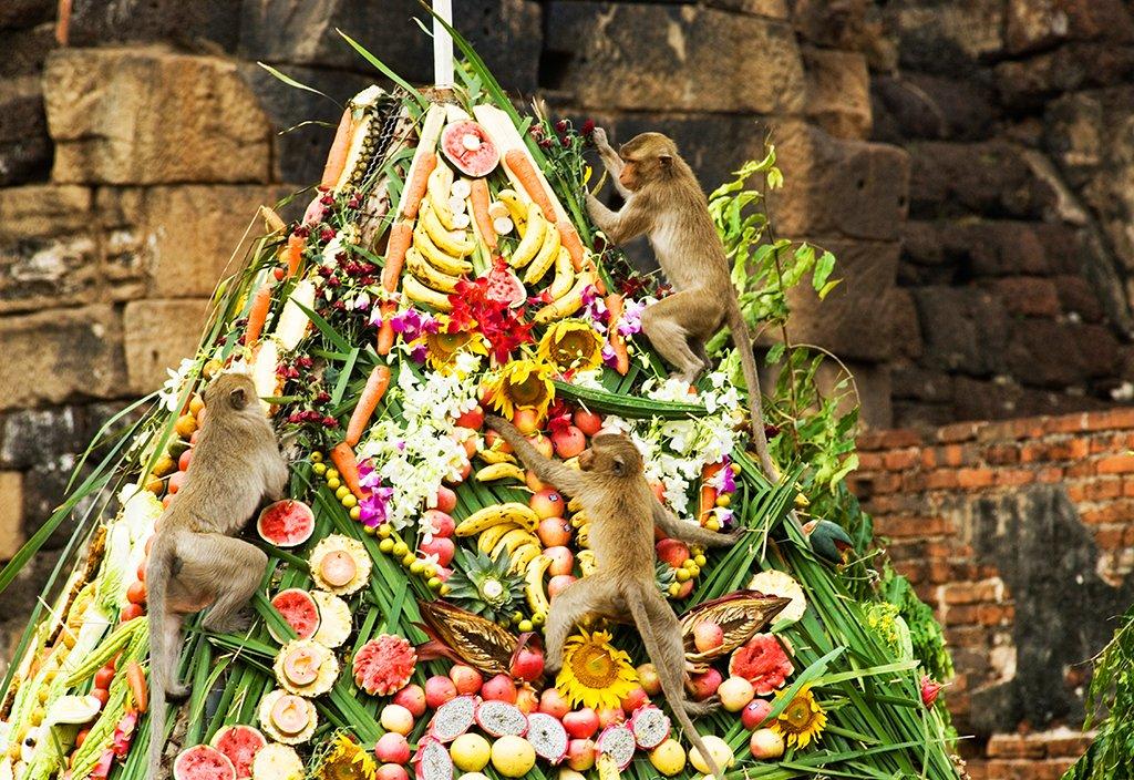 Banquet en l'honneur des singes